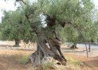 La magnificienza dell'albero
