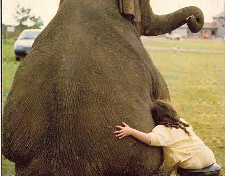 In difesa e giustificazione dei vegani animalisti…
