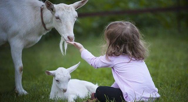 Costruiamo un mondo Vegan Antispecista…