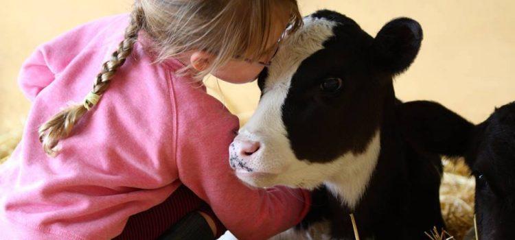 Temi fondamentali dell'Associazione Vegan Animalista AVA