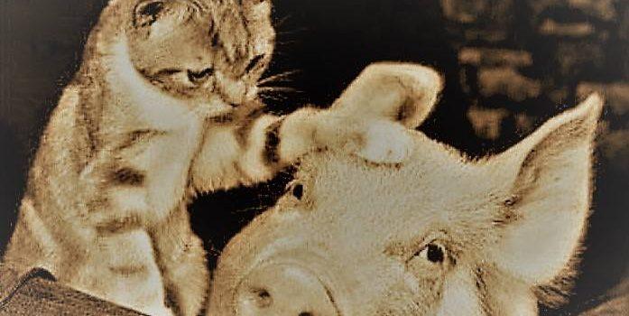 AMO GLI ANIMALI, MA OGNI TANTO ME LI MANGIO, E SPESSO LI INDOSSO