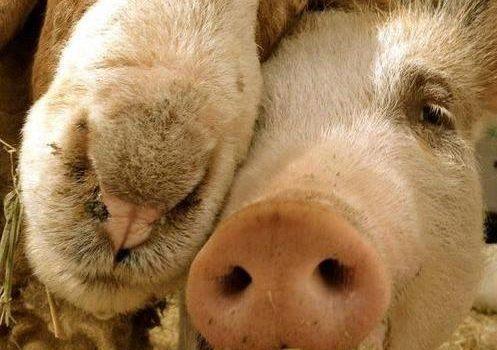 I danni della carne o i benefici del vegetarismo?