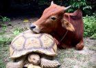 NON FATEMI SENTIRE IN COLPA SE MANGIO ANIMALI