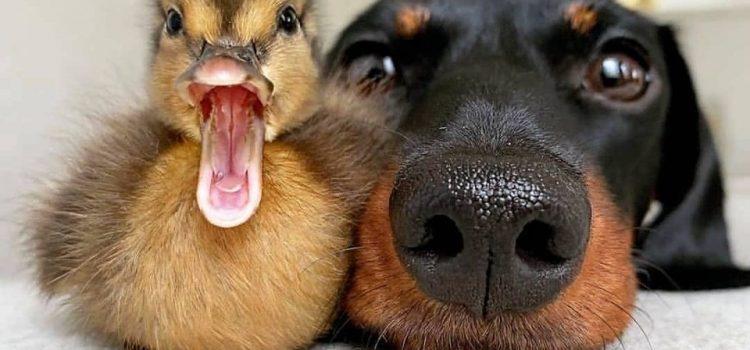 QUANDO GLI ANIMALI SONO MOTIVO DI DISSIDIO