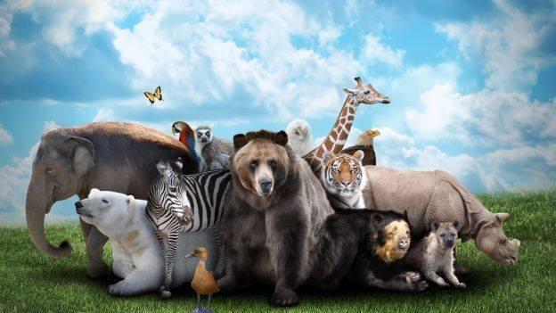 L'AVA al servizio di tutti gli animali per la loro liberazione