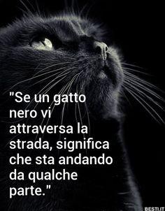 Della serie miti da sfatare. Se un gatto nero attraversa la strada è perchè sta andando per i fatti suoi…