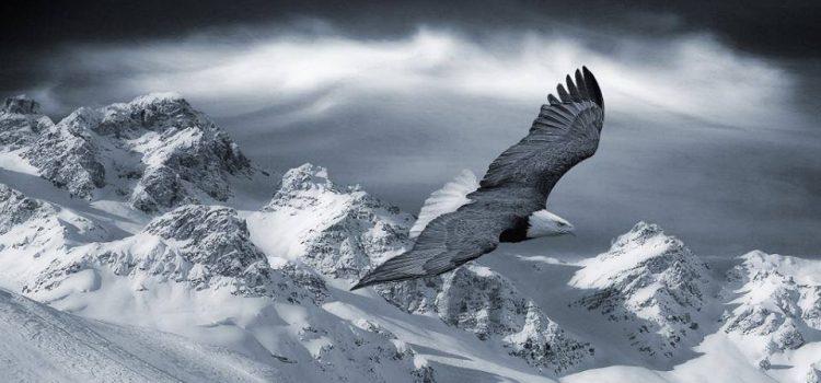 L'aquila la regina di tutti gli uccelli