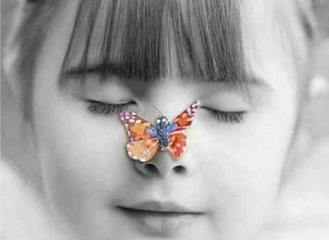 La farfalla, è qualcosa di particolare, non è un animale come gli altri