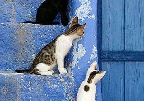 I gatti sono destinati a insegnarci che in natura non tutto ha uno scopo.  (Garrison Keillor)