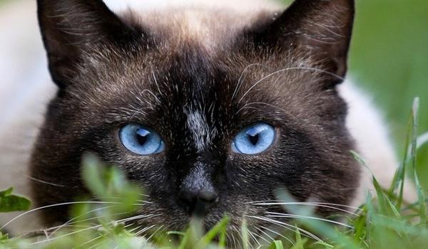 Mi dà sempre un brivido quando osservo un gatto che sta osservando qualcosa che io non riesco a vedere. (Eleanor Farjeon)