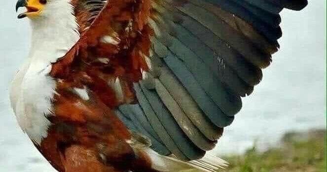 Quando vedi un'aquila, tu vedi una parte del genio; alza la testa! (William Blake)