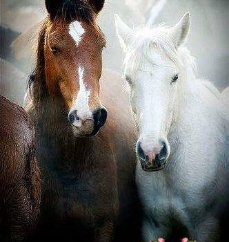 """""""Abbiamo praticamente dimenticato come sia strano che un animale così grande, possente e intelligente come il #cavallo… permetta a un altro, ben più debole animale, di montargli in groppa"""". (Peter Gray)"""