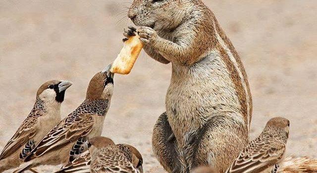 """""""Sono libero di mangiare quello che voglio""""!"""