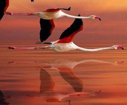 """""""Vola solo chi osa farlo"""" (Luis Sepúlveda)  """"Il volo ci ha regalato gli occhi degli uccelli, un punto di vista prezioso per osservare tanto mondo tutto insieme e lo scempio che ne stiamo facendo"""" (Le Corbusier) By Il Nostro Canto Libero"""