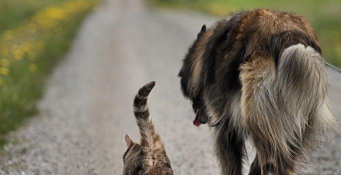 Non è tanto il viaggio che è importante; è il modo in cui trattiamo coloro che incontriamo e coloro che ci circondano, lungo la strada.  (Jeremy Aldana)