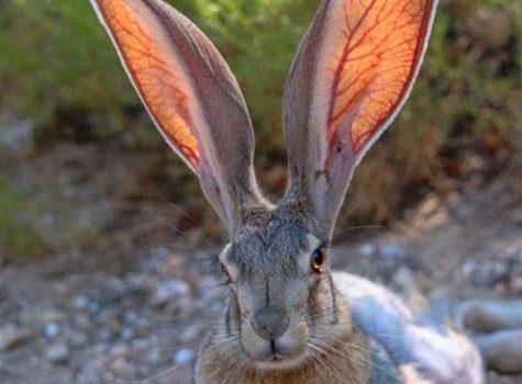 La Natura è semplicemente fantastica. Un miliardo di anni fa non avrebbe mai sospettato che noi avremmo portato gli occhiali, eppure ci ha fatto le orecchie! (Milton Berle)