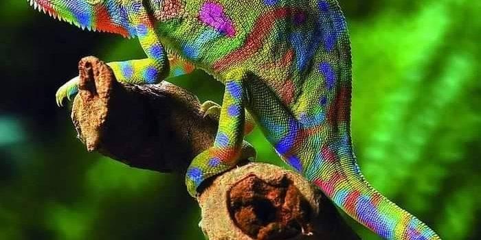 Della serie: Livelli di mimetizzazione: 3) camaleonte 2) insetto stecco 1) la vicina di casa dietro le tende mentre si fa i fatti miei…