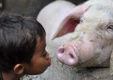 AMO GLI ANIMALI, MA OGNI TANTO LI MANGIO,  E SPESSO LI INDOSSO